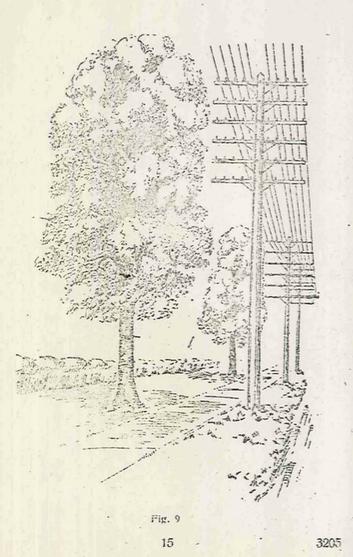 Figura 9 página 15. MC nº14 Poda de Árboles 1926